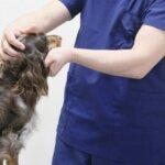 犬のノミダニ市販薬と動物病院のお薬の違い – 効果的な選び方とは?