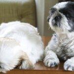 犬猫のノミマダニを見つける方法 – ノミの糞で寄生を確認!