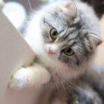 ドロンタール ジェネリック 猫・犬への効果と副作用、通販を調査!