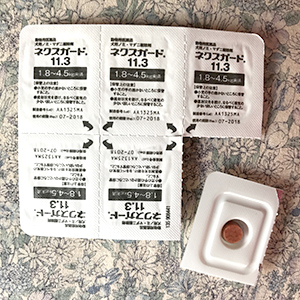 ショコラちゃん&ノエルちゃん