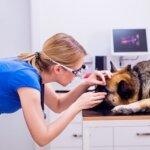 犬の白内障に予防効果のある食べ物を知って免疫力を高めよう!