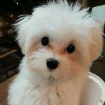 犬・猫のトリミング代の料金・値段を節約する方法 – カットモデルがオススメ!