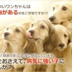 犬の口臭には乳酸菌!内臓からの臭いを治療改善しよう