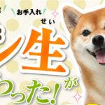 犬康食ワン 評判と感想口コミ – 楽天は最安値?