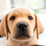 犬の食糞はヨーグルトで治せる!?