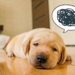 犬の口臭の治し方と消す方法 人気はサプリ! – 口臭がひどい!生臭い?