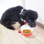 犬 ウンチを食べる 対策と原因 – 吐く場合は病気?