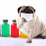 犬猫病院の選び方 – 信頼できる病院を探すポイント