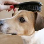 犬の耳掃除に使用するイヤーローション・イヤーパウダーの違いとは?
