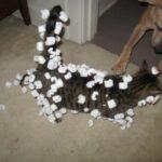 犬猫の静電気防止グッズ  – ネックレス・スプレーや首輪で対策