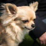 あいこな 犬用サプリで涙やけ・下痢を改善 – 副作用と口コミを調査!
