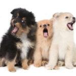 犬の無駄吠え防止グッズ・やめさせる方法 – 吠える理由を解説!