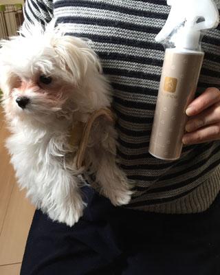 犬用化粧水「アヴァンス」を使っています。