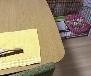 食卓の横にケージがあり、以前はウンチは直ぐに臭って気づいたのです。