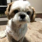セファレキシン 犬の膿皮症 – 通販価格と副作用・効果を調査!