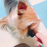 コルクマット犬用でダニ予防 – 犬の滑り止め フローリング対策